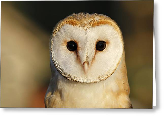 Barn Owl Beauty Greeting Card by Roeselien Raimond