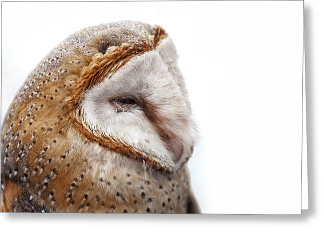 Barn Owl Close Up Greeting Card by Shaun Wilkinson