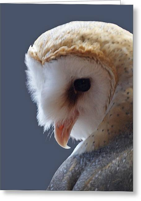 Dry Brush Greeting Cards - Barn Owl Dry Brushed Greeting Card by Ernie Echols