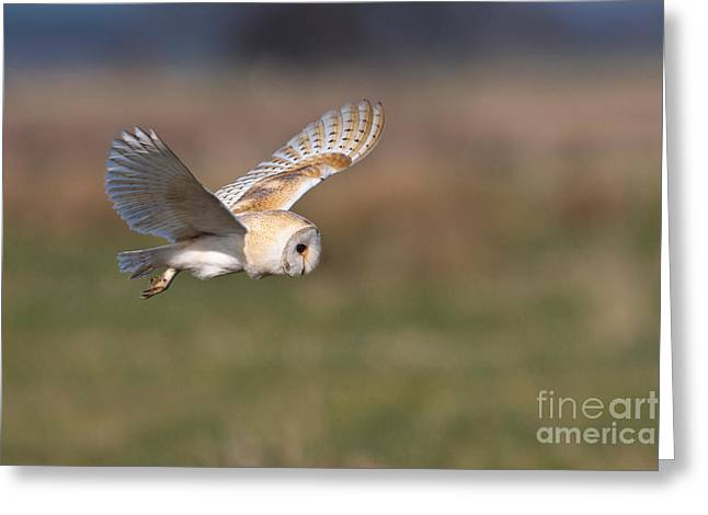 British Fauna Greeting Cards - Barn Owl Hunting Greeting Card by Thomas Hanahoe