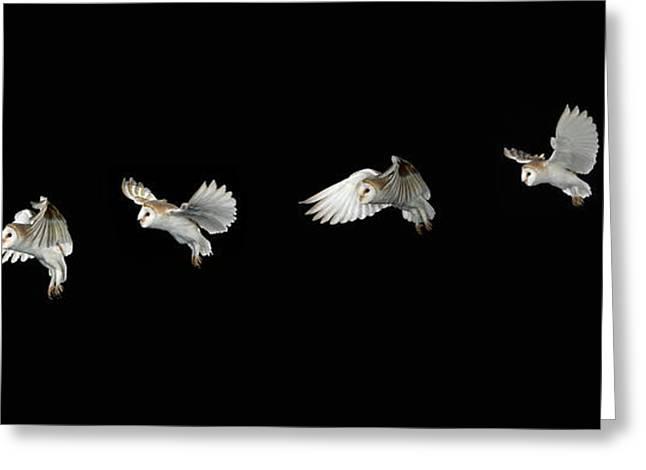 Barn Owl In Flight Greeting Card by Stephen Dalton