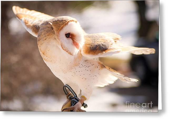 Lori England Zornes Greeting Cards - Barn Owl in the Breeze Greeting Card by Lori England Zornes
