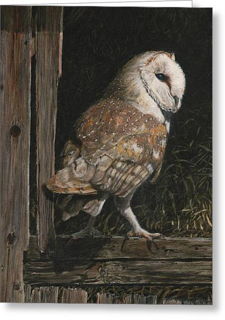 Barn Wood Greeting Cards - Barn Owl in the Old Barn Greeting Card by Rob Dreyer AFC