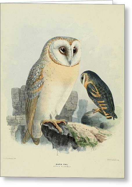 J.g. Greeting Cards - Barn Owl Greeting Card by J G Keulemans