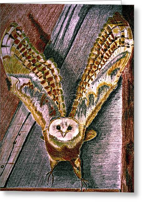 Full-length Portrait Drawings Greeting Cards - Barn Owl Greeting Card by Jo Ann