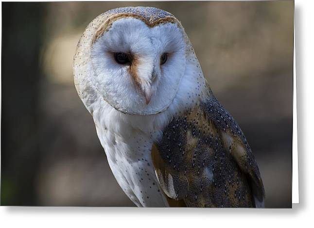 Owl Picture Greeting Cards - Barn owl Portrait Greeting Card by Chris Flees