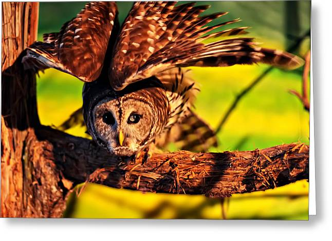 Owl Picture Greeting Cards - Barn Owl preparing to fly Greeting Card by Chris Flees