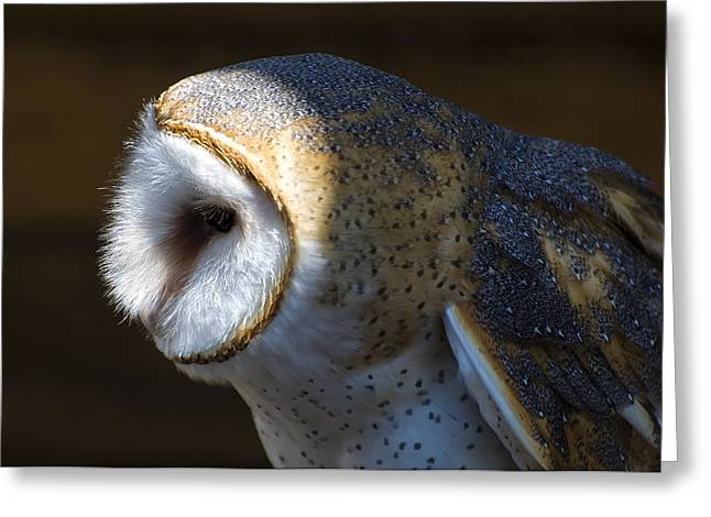 Owl Picture Greeting Cards - Barn Owl profile Greeting Card by Chris Flees