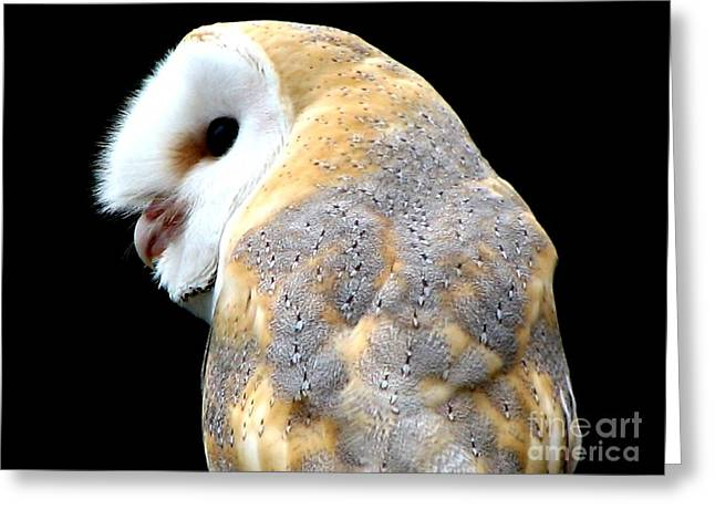 Hawk Creek Greeting Cards - Barn Owl Greeting Card by Rose Santuci-Sofranko