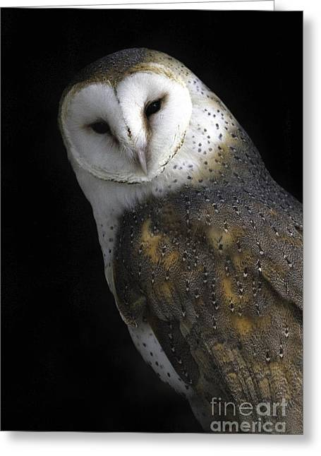 Tim Moore Greeting Cards - Barn Owl Greeting Card by Tim Moore