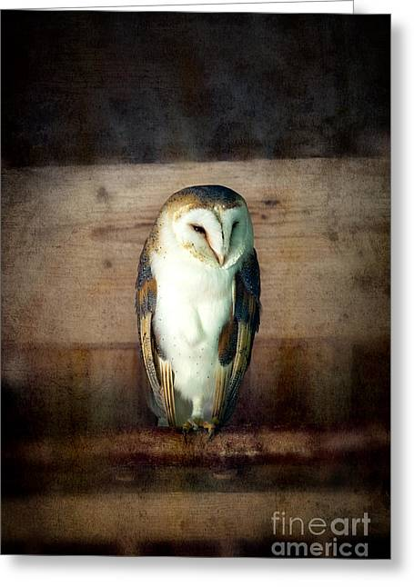 Mottled Greeting Cards - Barn owl vintage Greeting Card by Jane Rix
