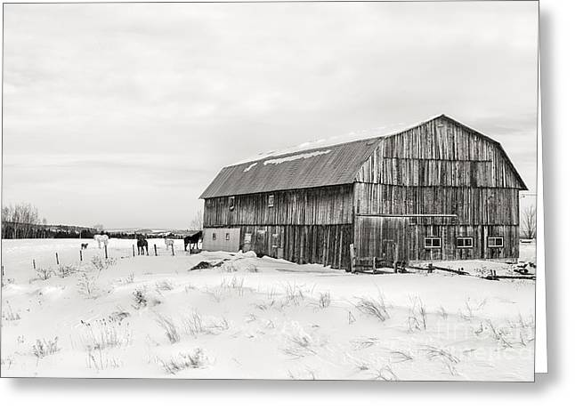 Wooden House Greeting Cards - Barn Quebec province in  black and white Greeting Card by Jane Rix