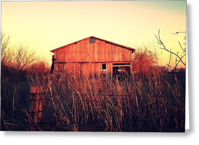 Old Barns Pyrography Greeting Cards - Barn Greeting Card by Steve Coy