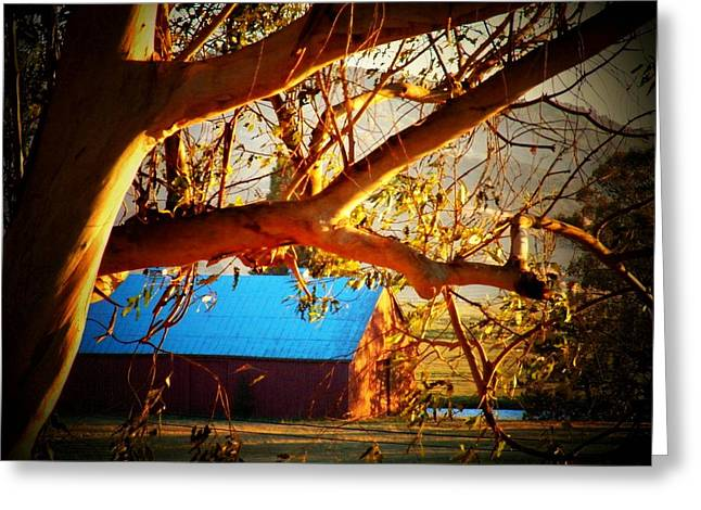 Sonoma County Greeting Cards - Barn Under Tree Greeting Card by Joyce Kimble Smith