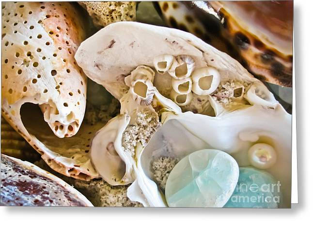 Shell Texture Greeting Cards - Barnacles and Shells Greeting Card by Colleen Kammerer