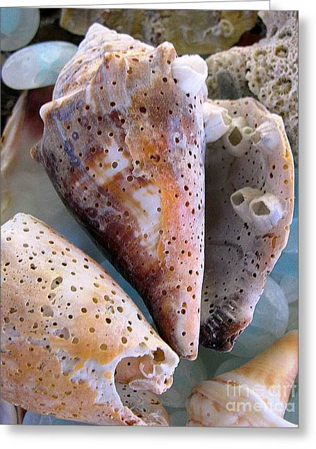 Original Photographs Greeting Cards - Barnacles Greeting Card by Colleen Kammerer