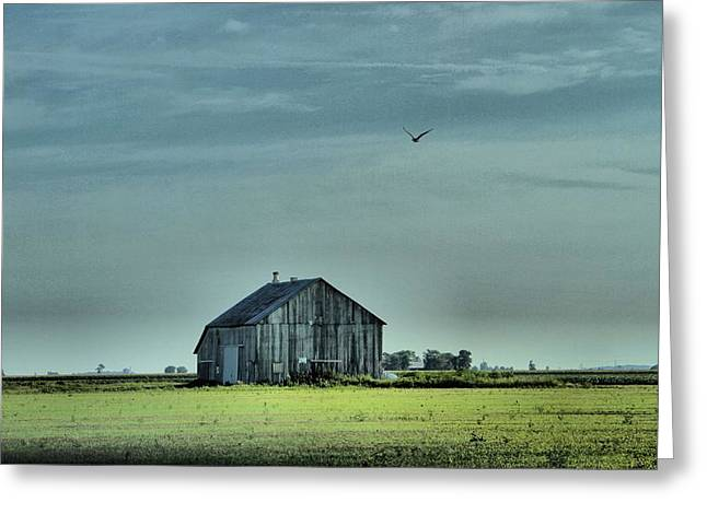 The Flight Home Greeting Card by Dan Sproul