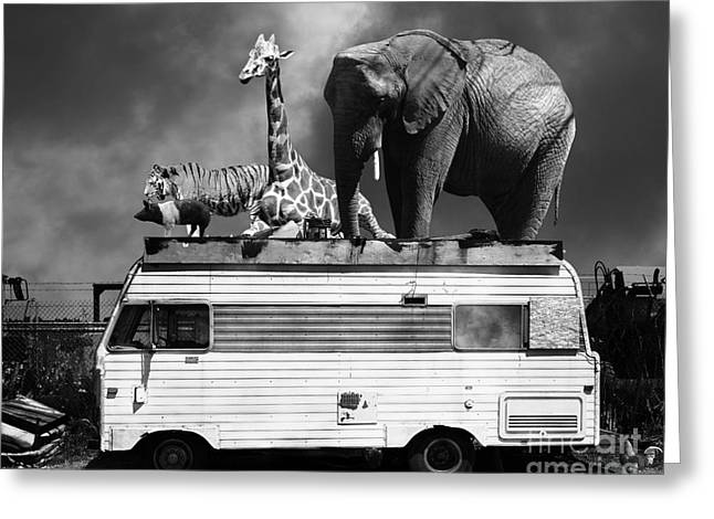 Ringling Brothers Greeting Cards - Barnum and Bailey Goes On a Road Trip 5D22705 Black and White Greeting Card by Wingsdomain Art and Photography