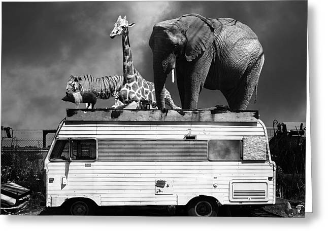 Ringling Brothers Greeting Cards - Barnum and Bailey Goes On a Road Trip 5D22705 Square Black and White Greeting Card by Wingsdomain Art and Photography