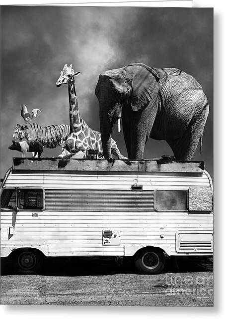 Ringling Brothers Greeting Cards - Barnum and Bailey Goes On a Road Trip 5D22705 Vertical Black and White Greeting Card by Wingsdomain Art and Photography