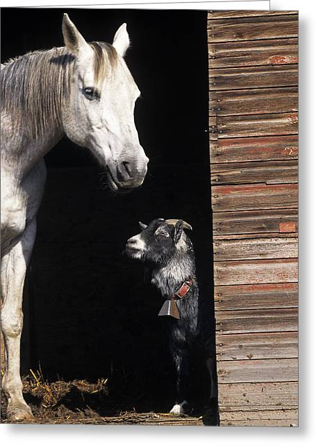 Wooden Building Greeting Cards - Barnyard Buddies Greeting Card by Latah Trail Foundation