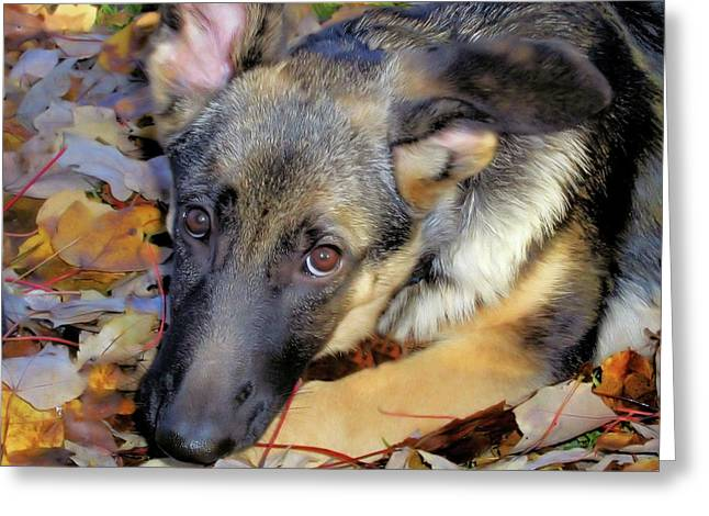 Baron In The Leaves Greeting Card by Karol Livote