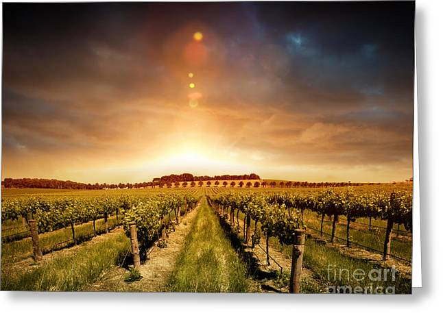 Sunset Posters Pyrography Greeting Cards - Barossa Vineyard Greeting Card by Boon Mee
