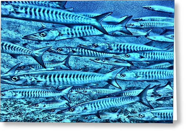 Undersea Photography Greeting Cards - Barracuda Greeting Card by Roy Pedersen