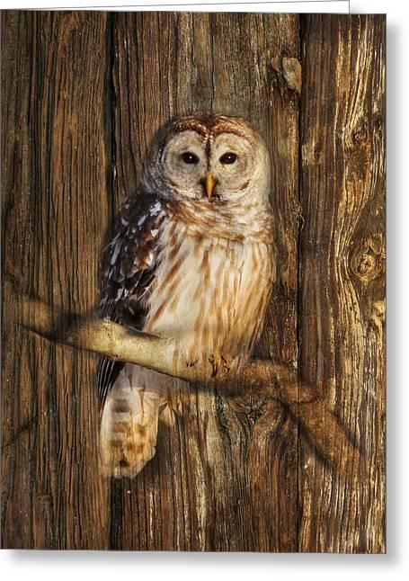 Barred Owl Greeting Cards - Barred Owl 1 Greeting Card by Lori Deiter