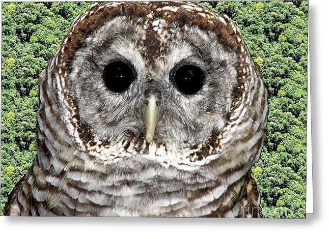 Hawk Creek Greeting Cards - Barred Owl 1 Greeting Card by Rose Santuci-Sofranko