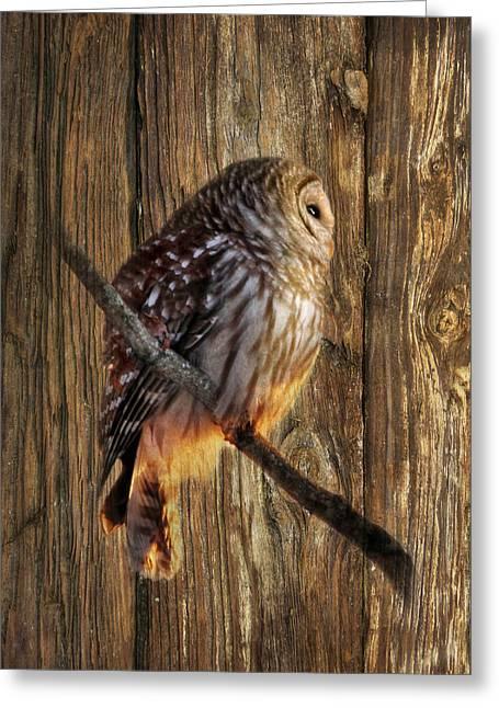 Barred Owl Greeting Cards - Barred Owl 2 Greeting Card by Lori Deiter