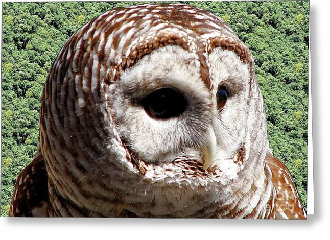 Hawk Creek Greeting Cards - Barred Owl 2 Greeting Card by Rose Santuci-Sofranko