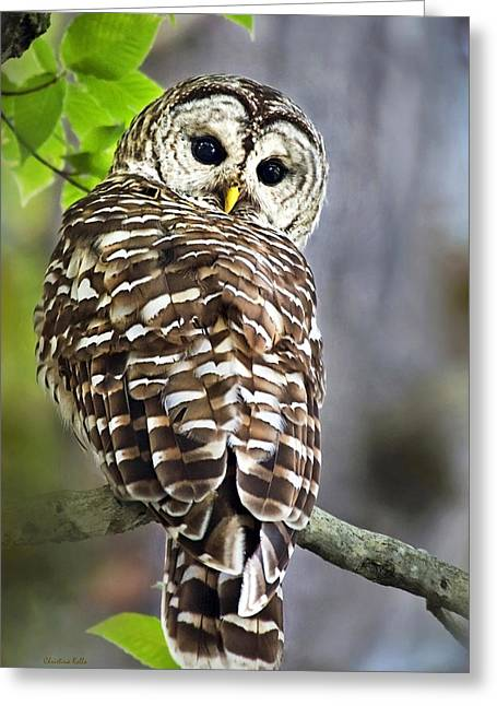 Birds. Birds Of Prey Greeting Cards - Barred Owl Greeting Card by Christina Rollo