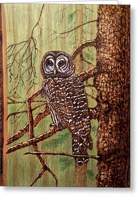 Woodburnings Pyrography Greeting Cards - Barred Owl Greeting Card by Danette Smith