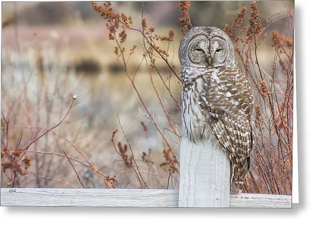 Ollie Greeting Cards - Barred Owl in Bend Greeting Card by Jaime Weatherford