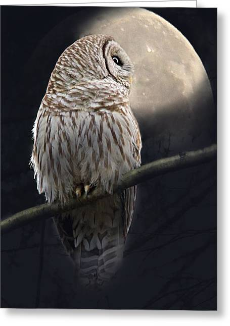 Moonglow Greeting Cards - Barred Owl Moon Glow Greeting Card by Jennie Marie Schell
