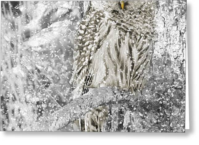 Barred Owl Snowy Day in the Forest Greeting Card by Jennie Marie Schell
