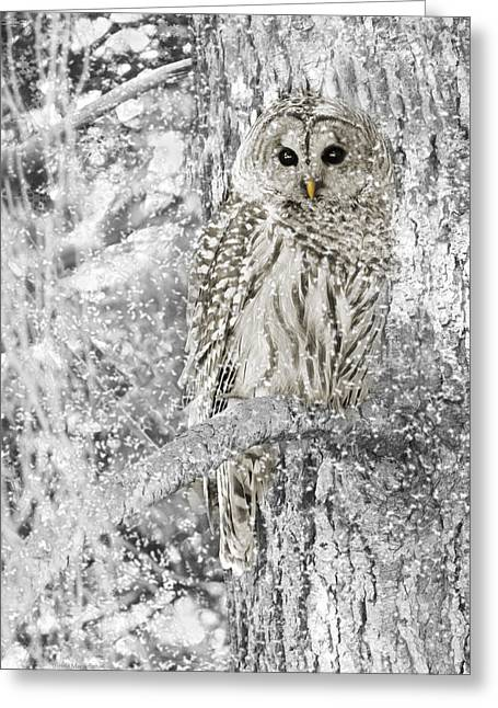 White Greeting Cards - Barred Owl Snowy Day in the Forest Greeting Card by Jennie Marie Schell