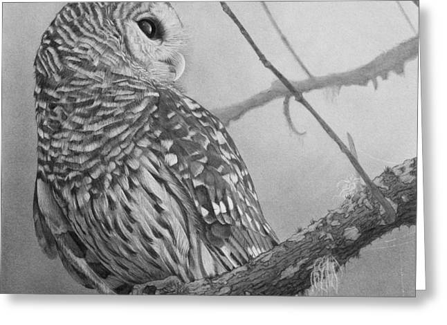 White Drawings Greeting Cards - Barred Owl Greeting Card by Tim Dangaran