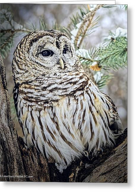 Owl Greeting Cards - Barred Owl Watching Greeting Card by LeeAnn McLaneGoetz McLaneGoetzStudioLLCcom