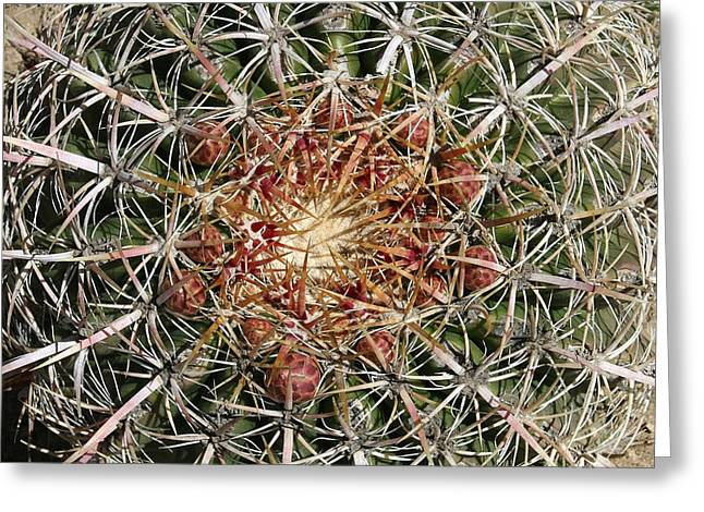 Thorny Desert Plant Greeting Cards - Barrel Cactus Greeting Card by Ellen Henneke