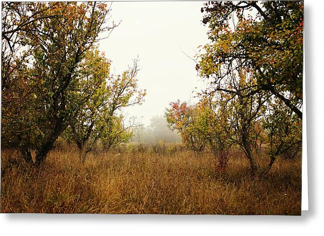 Wild Orchards Greeting Cards - Barren Greeting Card by Silvia Floarea Toth