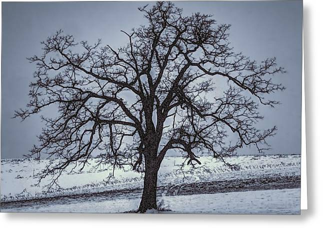 barren winter scene with tree Greeting Card by Dan Friend