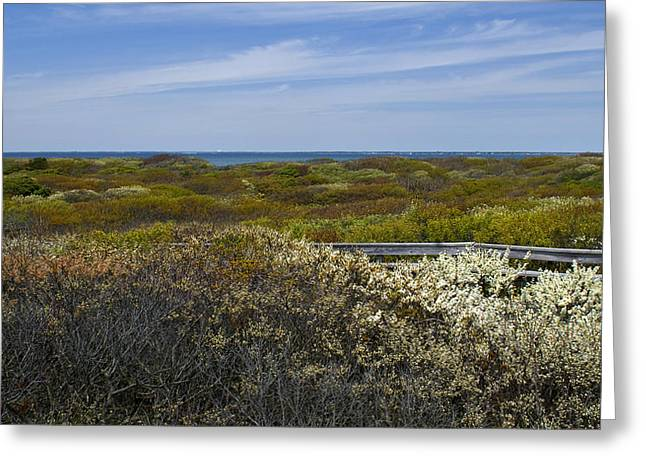 Sand Dune Greeting Cards - Barrier Island in Springtime Greeting Card by Alida Thorpe