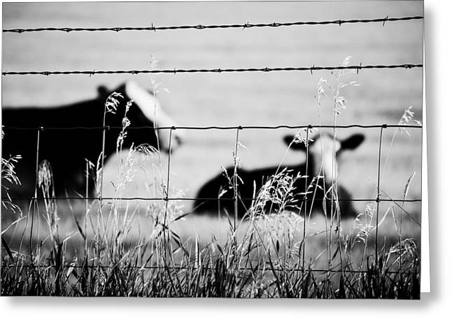 Moos Print Greeting Cards - Barriers Greeting Card by Matthew Blum