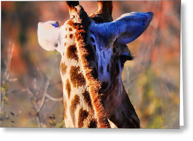 Bashful Giraffe  Greeting Card by Alexandra Jordankova