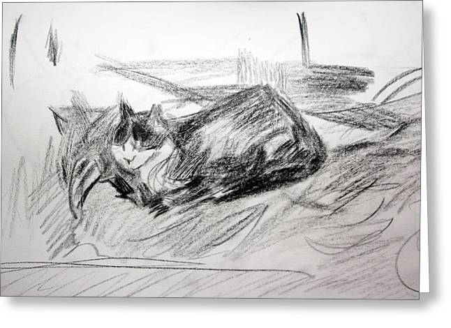 Drawings Of Cats Greeting Cards - Bashful Pencil Study Greeting Card by Anita Dale Livaditis