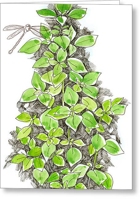 Sketchbook Greeting Cards - Basil and Dragonfly Greeting Card by Cathie Richardson