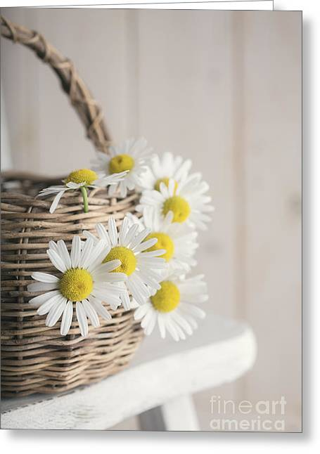 Weave Greeting Cards - Basket Full of Summer Daisys Greeting Card by Edward Fielding