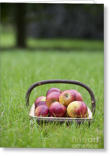 Fresh Picked Fruit Greeting Cards - Basket of Apples Greeting Card by Tim Gainey